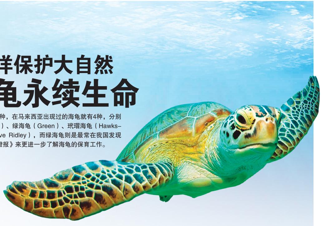 爱护海洋保护大自然 让海龟永续生命图片