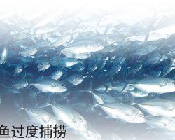 全球野生鱼过度捕捞 渔业可持续发展受考验