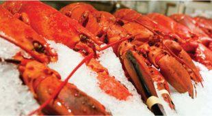 亚洲(Asia)人民爱上龙虾 美国(United States)积极开拓新市场