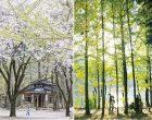 韩国南怡岛(Nami Island,South Korea)  因《冬季旅游》而一举成名