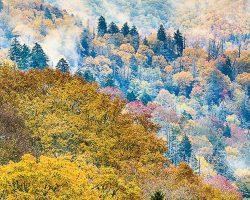 美国(United States)  大烟山(Great Smoky Mountains)  最受欢迎的国家公园所在地