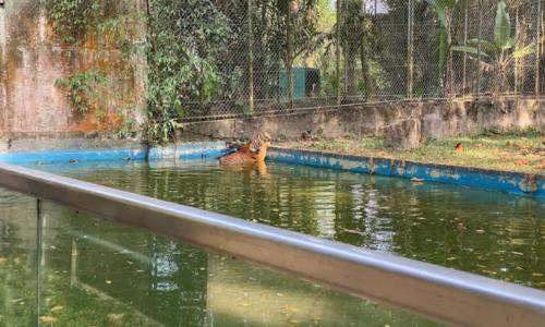 运水高集团(Waterco) 为国家动物园提供干净水源